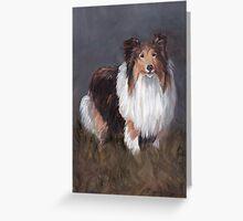 Shetland Sheepdog Greeting Card