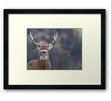 Whitetail Deer Portrait, Trophy Buck Framed Print