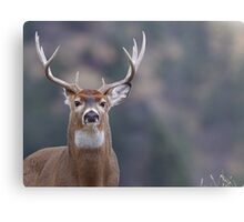 Whitetail Deer Portrait, Trophy Buck Metal Print