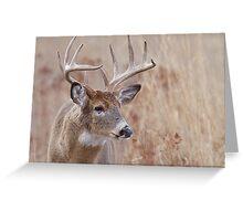 Whitetail Deer Portrait, Trophy Buck in prairie habitat Greeting Card