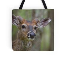 Whitetail Deer Portrait, Buck with newly emergent antlers Tote Bag
