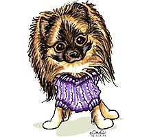 Plum Cute Pomeranian Photographic Print