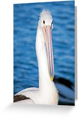 Ms Pelican by jayneeldred