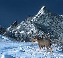 Deer Crossing by Gregory J Summers