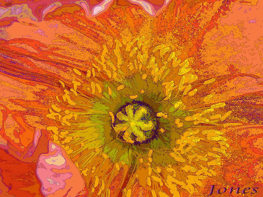 """The Poppy"" by Gail Jones"