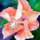 Curled Hibiscus by jayneeldred