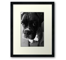 Can't You Tell... It wasn't Me... Framed Print