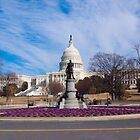 Purple flowers by US Capital building, Washington by Kirk D. Belmont Photography