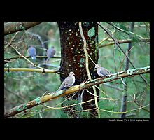 Zenaida Macroura - Mourning Doves In Rainy Forest  by © Sophie W. Smith