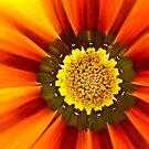 Flower Center by Soniris
