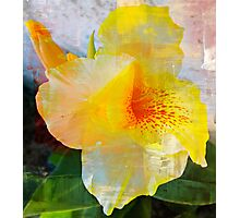 Textured Beauty Photographic Print