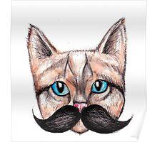 Moustache Cat Poster