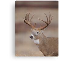 Whitetail Deer Portrait - Trophy Buck Canvas Print