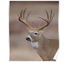 Whitetail Deer Portrait - Trophy Buck Poster