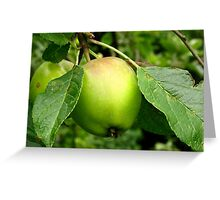 Apple on its tree Greeting Card