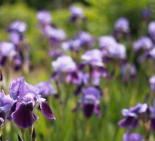 Iris by NaomiGrace