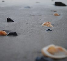 Shells by Claire Jackson