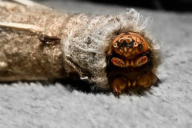 Caterpiller Close up 01 by kevin chippindall
