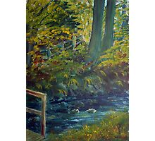 Woodland Stream, Glenoe Photographic Print
