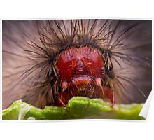 Hungry Red Caterpillar Poster