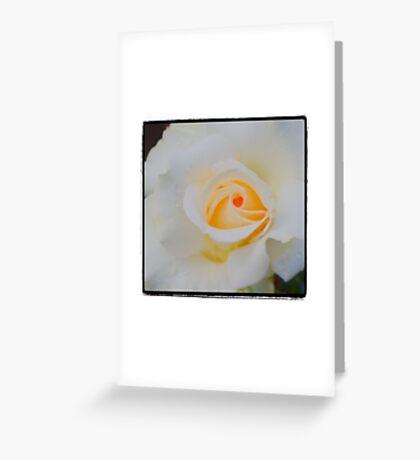 Yellow White Rose Greeting Card