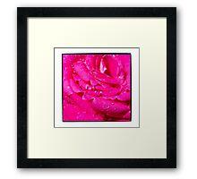 Viciously Hot Pink Rose Framed Print