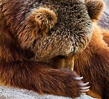 Brown bear by digoarpi