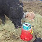 The Little Drummer Bull by JobieMom