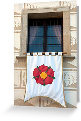Five Petal Rose by phil decocco