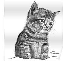 Wilbur The Kitten Poster