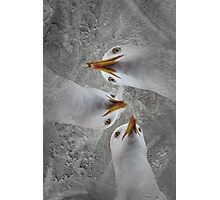 I feel like a fish Photographic Print