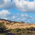 Marina State Beach Dunes IV by JimPavelle