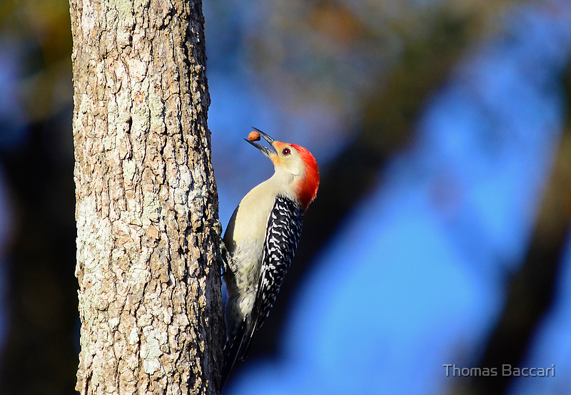 Hey Look What I Found (Woodpecker) by imagetj