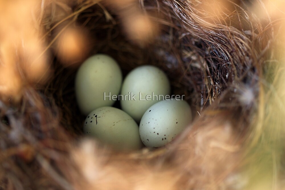 Bird Nest by Henrik Lehnerer