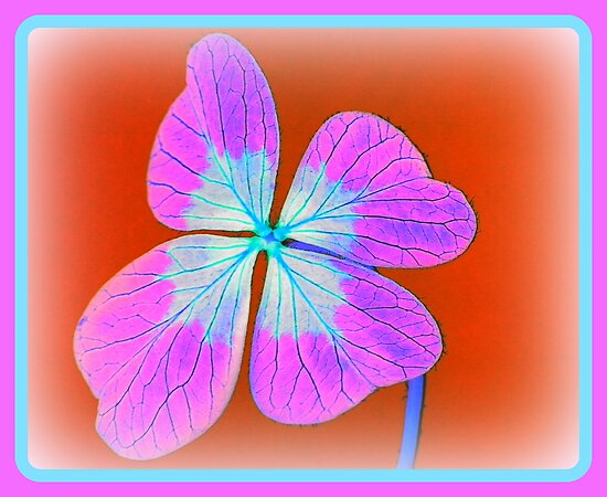 4-leaf clover in pink by ©The Creative  Minds