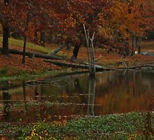 Lake and Reflection by Ginger  Barritt