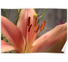 Petals & Pollen Poster