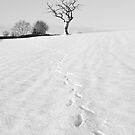 Footsteps by Brian Kerr
