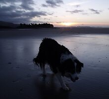 Laddie at sunset. by Michael Haslam