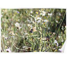 La Farfalla nei Fiori Poster