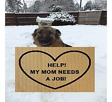 German Shepherd Help My Mom Needs A Job Photographic Print