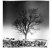 Tree in the Snow, Southern Upland Way, Scottish Borders Poster