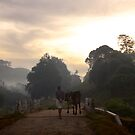 Morning stroll in Munnar by EveW