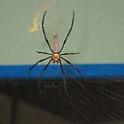 Australian Golden spider by sarbi