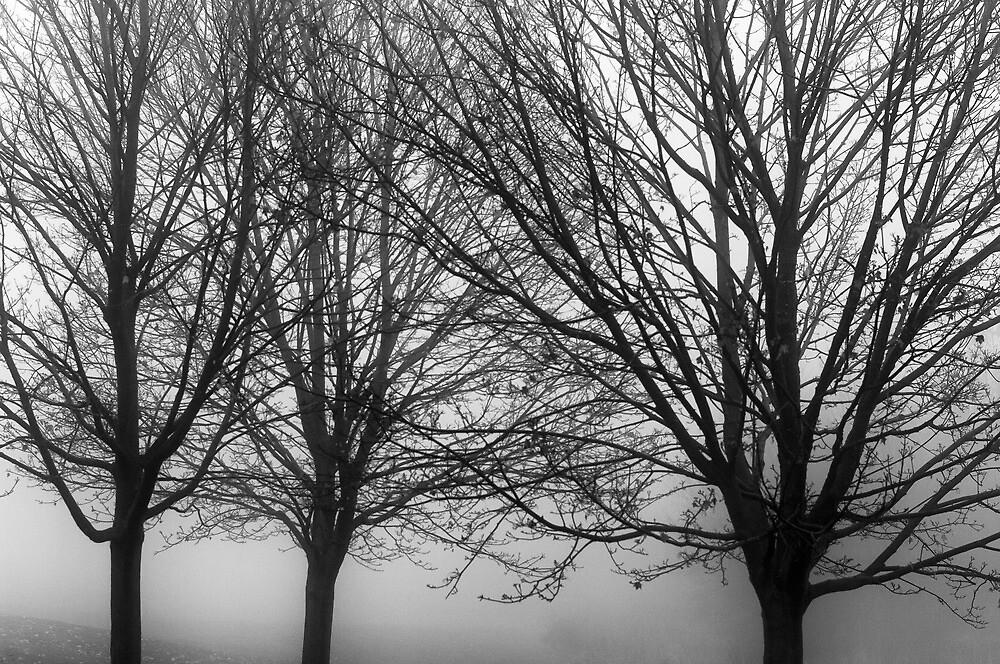 Trio by Bruce Walker