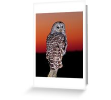 sunset owl Greeting Card