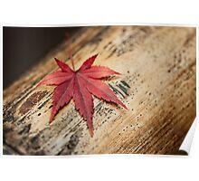 Japanese Maple Leaf Poster