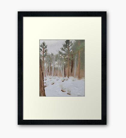 Galena Creek Forest (Plein-air Study) Framed Print