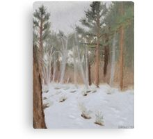 Galena Creek Forest (Plein-air Study) Canvas Print