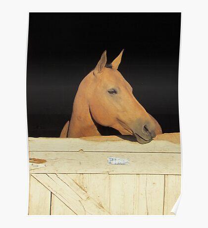 County Fair Horse Poster